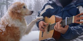 Acoustic Trench plays Paradise by Coldplay fingerstyle guitar with his dog