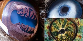 animal-eyes-photos-featured-image